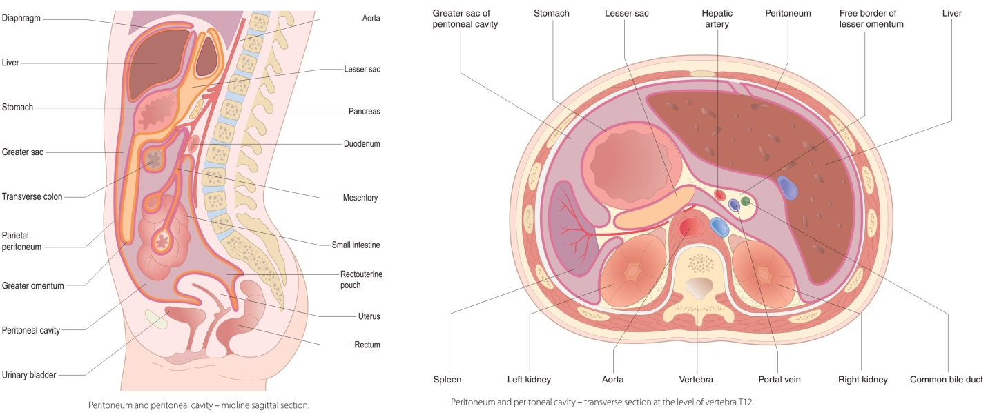 Cancer of peritoneal cavity Peritoneal cancer how long to live - gianus-cork.ro